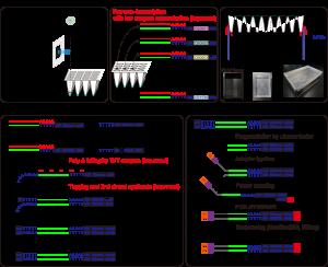 Schematic representation of Quartz-Seq2